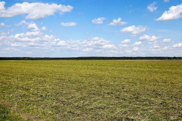 Onrijp groen gras gefotografeerd onrijp groen gras in de zomer blauwe hemel