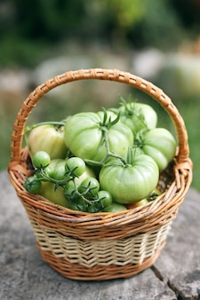 Onrijpe, groene tomaten in een klein mandje