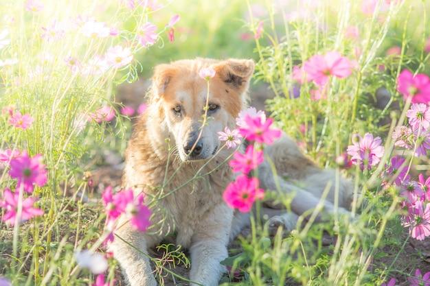 hond met een roos in de mond gratis foto