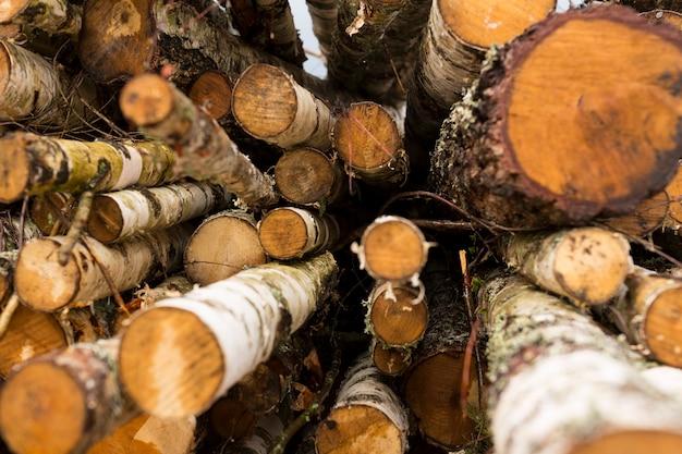 Ontbossing, bosvernietiging. hout oogsten. stapel, stapel van vele gezaagde boomstammen van pijnbomen. hoge kwaliteit foto