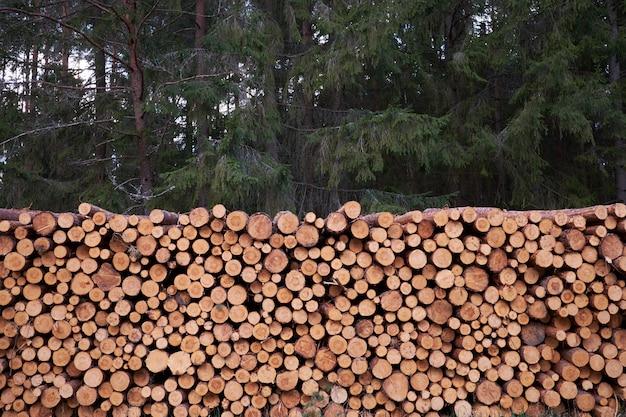 Ontbossing. houten logboeken van dennenbossen in het bos.