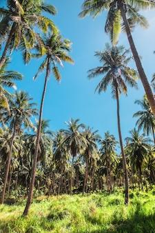 Ontbossing in borneo orang-oetans verdwijnen in de jungles in maleisië en indonesië