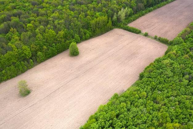 Ontbossing in een groot bos