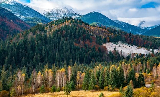Ontbossing in karpatenbossen in een heerlijk warme herfst
