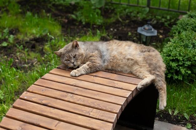 Ontevreden kat ligt op een bankje