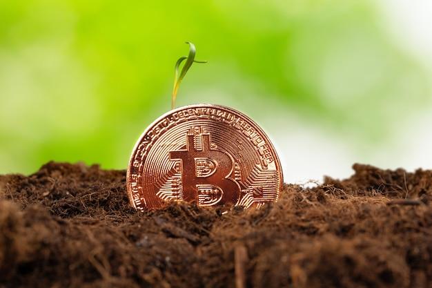 Ontkiemen plant en bitcoin groei van bitcoin crypto-valuta