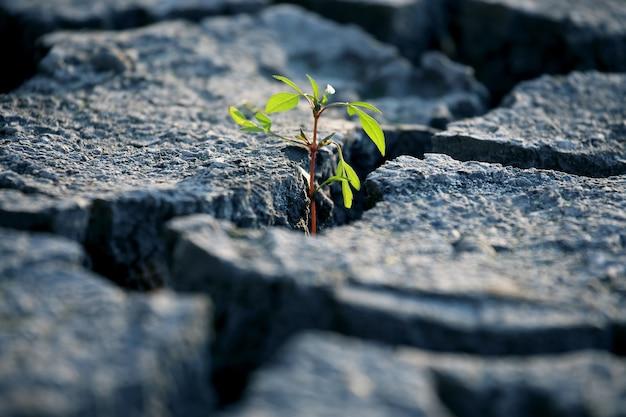 Ontkiemen planten die groeien op zeer droge, gebarsten aarde