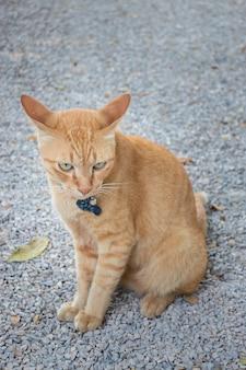 Ontspannen kat in de buitentuin