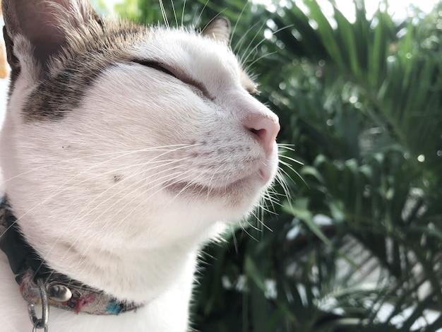 Ontspannende kat