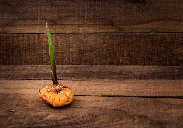 Ontsproten gele gladiolen bol op rustieke houten tafel met kopie ruimte.