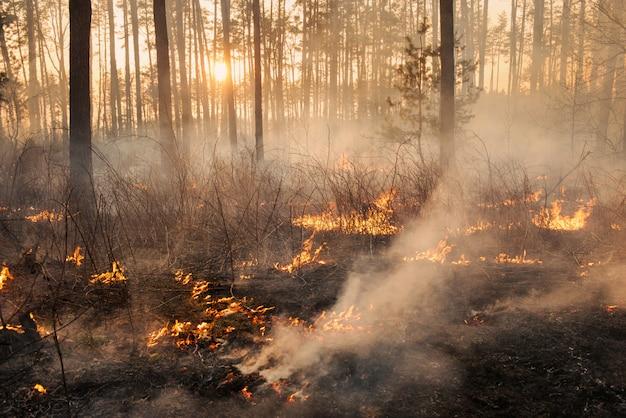 Ontwikkeling van bosbrand op zonsondergang achtergrond