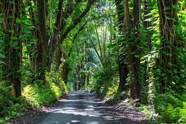 Onverharde weg in afgelegen jungle in big island, hawaii