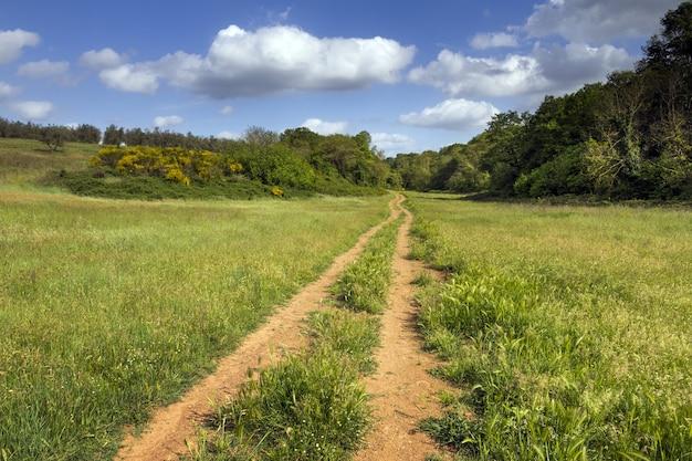 Onverharde weg in een mooi en groot groen veld bij daglicht