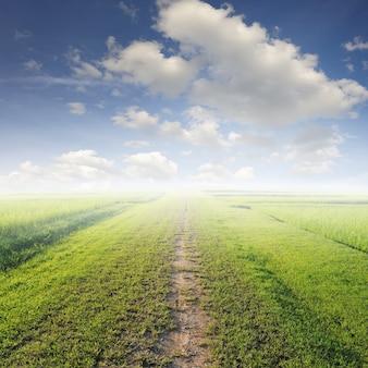 Onverharde weg in een weiland