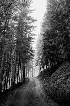 Onverharde weg in het bos, italië