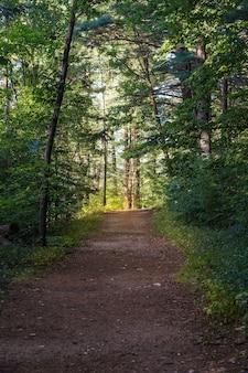 Onverharde weg in het midden van het bos op een zonnige dag met bos bomen op de achtergrond