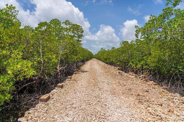 Onverharde weg onder mangroven op een heldere zonnige dag op het eiland zanzibar, tanzania, afrika