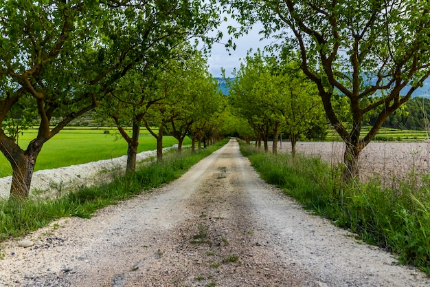 Onverharde weg tussen groene moerbeibomen tussen weilanden.