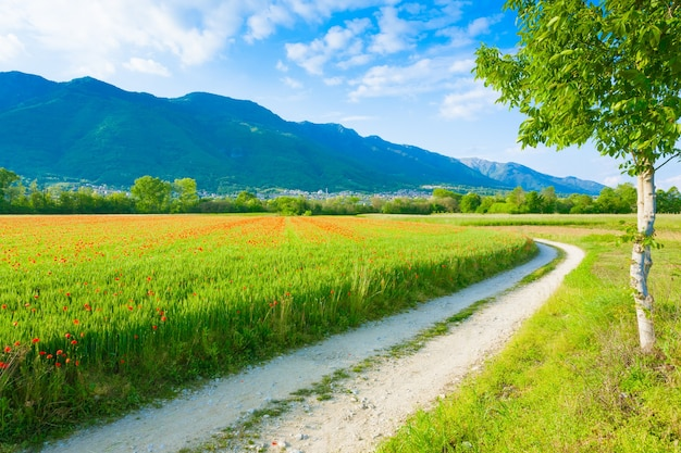 Onverharde weg via italiaans platteland. gebied van rode papavers. plattelandsleven. italiaans landschap