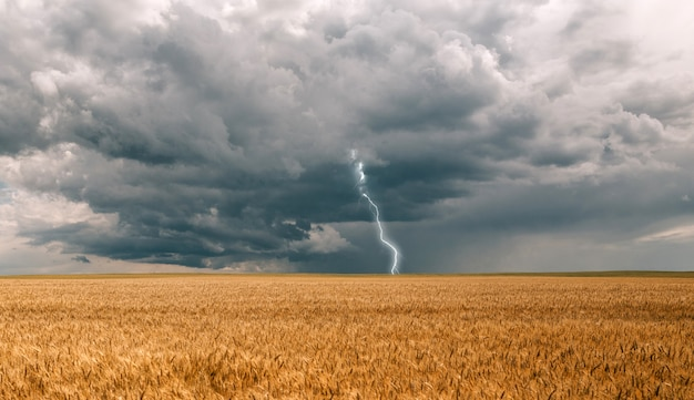 Onweersbui orkaan wolken veld landbouwgewassen tarwe