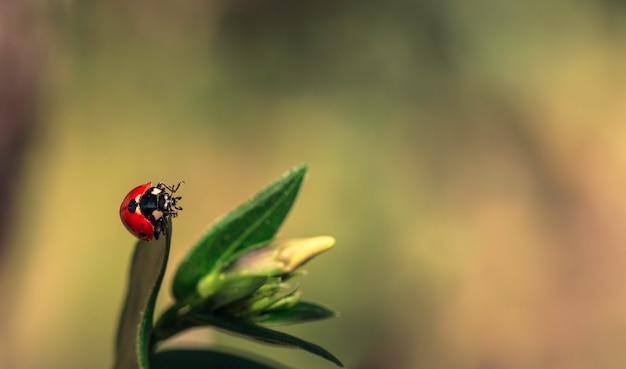 Onzelieveheersbeestje op een groen blad op een zonnige dag