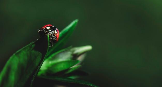 Onzelieveheersbeestje op een zonnig groen blad met groen