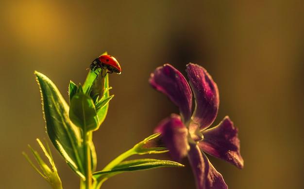 Onzelieveheersbeestje op een zonnig groen blad