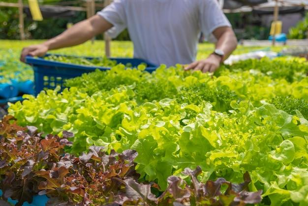 Oogst hydrocultuur groenten, niet giftig. geplant door water geen aziatische stijl van de grond mooie boom.