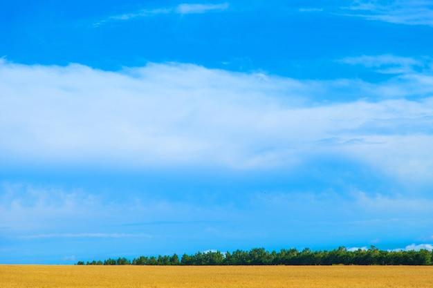 Oogst rijpe tarwe groeit in het veld met blauwe lucht landschap