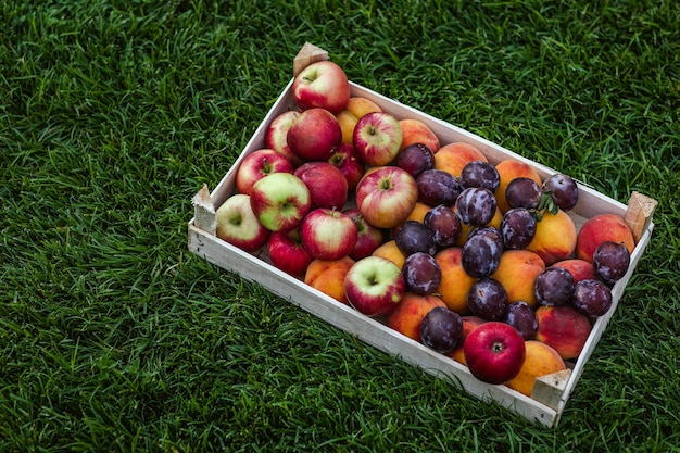 Oogst van appels, plompen en perziken gegroepeerd in een doos die op groen gras ligt.