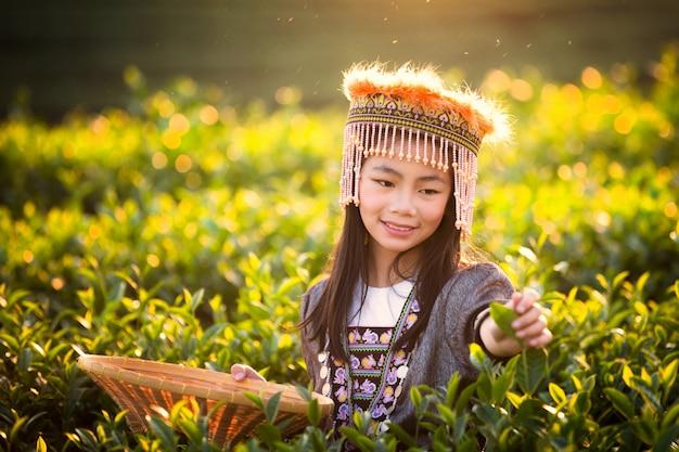 Oogst van groene theebladeren door een meisje