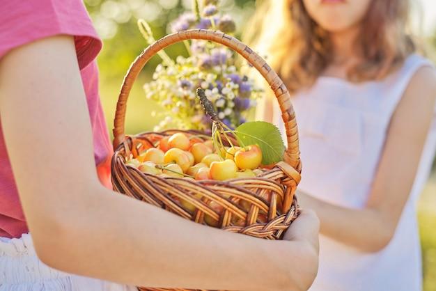 Oogst van verse zoete gele kersen in mand in handen van meisje
