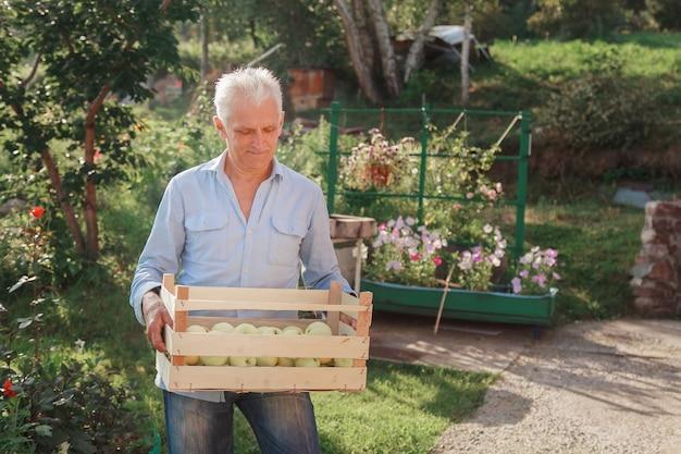 Oogst: witte appels in een houten kist. producten klaar voor export. import van seizoensgoederen. een oudere man houdt een doos vast. de tuinman geniet van de vruchten van zijn werk