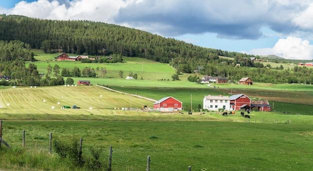 Oogsten en verpakken van hooi op een boerderij, folldal, noorwegen