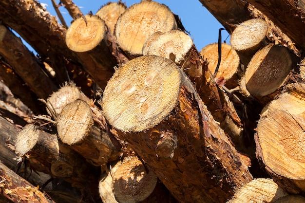 Oogsten van dennenhout voor de productie van houten producten en de productie van bouwmaterialen