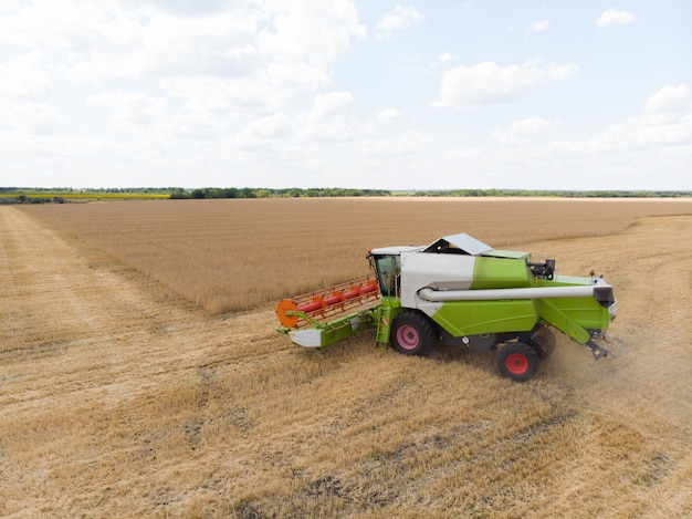 Oogsten van tarwe in de zomer. maaidorser landbouwmachine die gouden rijpe tarwe op het gebied verzamelen.
