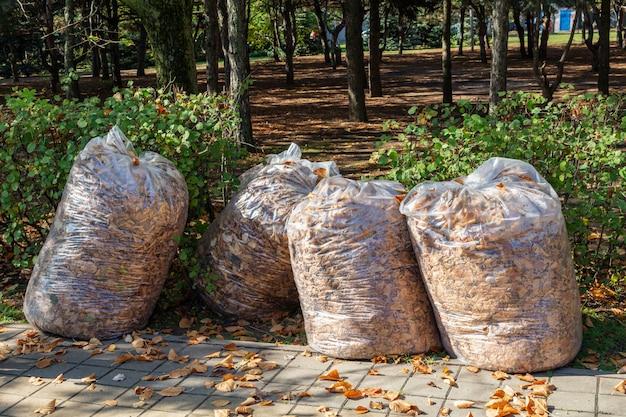 Oogstende herfstbladeren in grote plastic zakken. het park schoonmaken