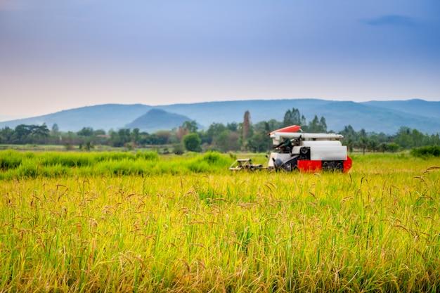 Oogstende rijsttractor die aan padieveld op heuvels en blauwe hemelachtergrond werkt