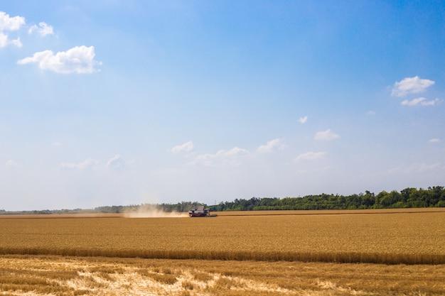 Oogsters in een veld met tarwe zijn bezig met oogsten