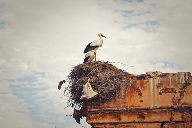 Ooievaar in zijn nest