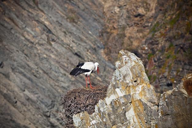 Ooievaar op een klif aan de westkust van portugal. horizontaal schot