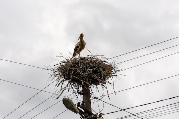 Ooievaars in nest op hoge elektriciteitspaal