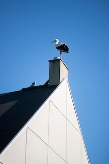 Ooievaarsvogel bovenop schoorsteen op blauwe hemel