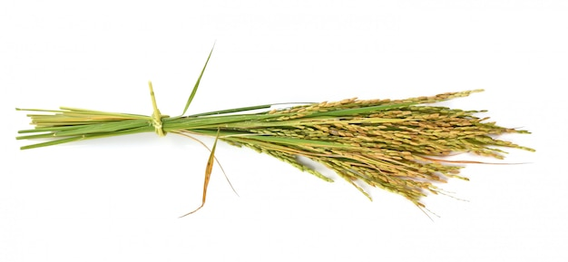 Oor van rijst op witte muur