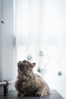 Op de bank zit een kat ergens naar te staren