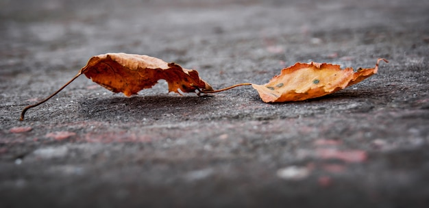 Op de grond vallen twee droge bladeren van de boom