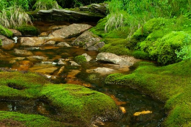 Op de oever zijn de stenen bedekt met mos