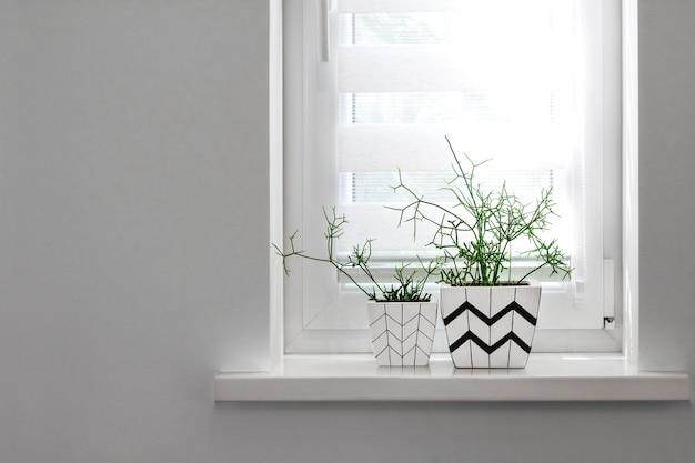 Op de vensterbank staan twee witte vierkante bloempotten met geometrische patronen met daarin geplant rhipsalisplanten
