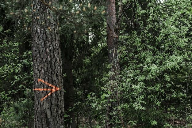 Op een boom in het bos is een oranje pijl getekend die het juiste pad naar de wandeling aangeeft