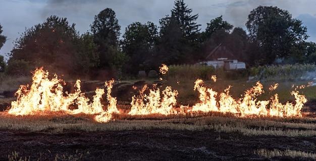 Op een hete zomerdag brandt droog gras op het veld. brandend veld met droog gras.